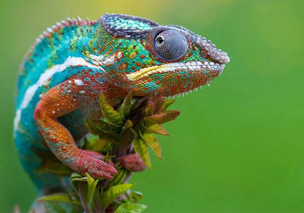 ТЕРЕМОК. Удивительные животные с самой необычной кожей