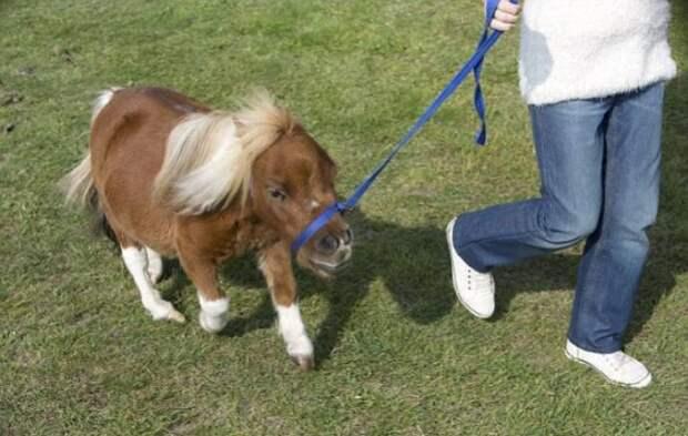 Мой крошечный пони