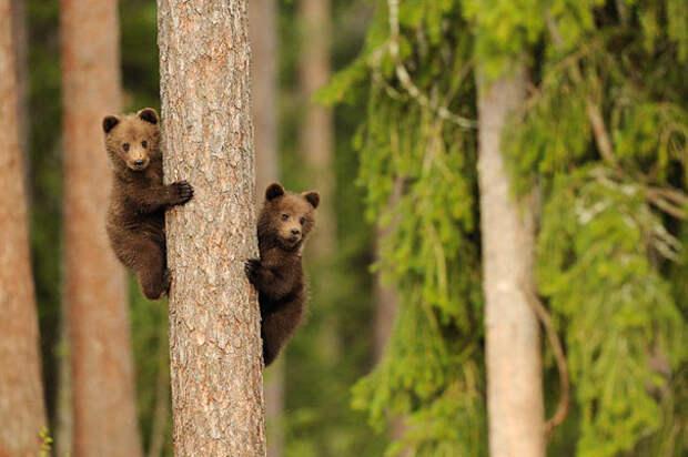 Животные-близнецы - 25 очаровательных фото-13