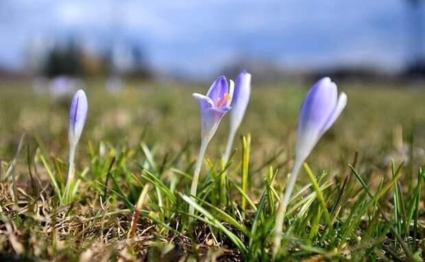 Ранняя весна.