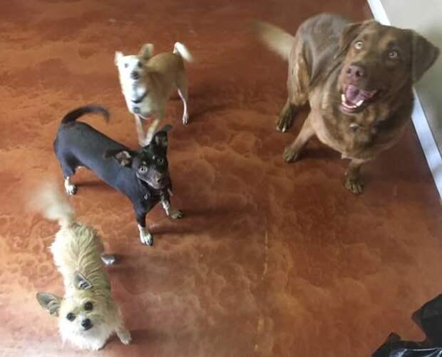 «Хочешь жить? Используй зубы!» Шоколадный пёс прижался к кирпичной стене — он сделал свое дело…