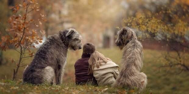 Животные, которые могут нас спасти: как собаки и кошки ...