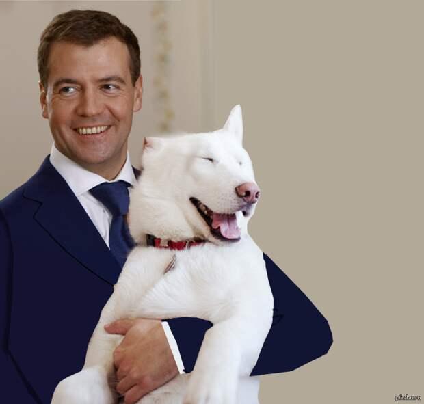 Медведев предложил отбирать животных у хозяев, которые жестоко обращаются с ними