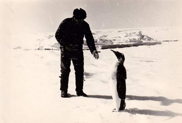 Антарктида, 1980