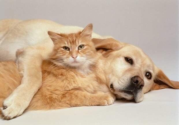 15. Кошки и собаки не различают цвета МИФ И ПРАВДА, животные, животный мир, интересные факты, миф, познавательно, факты о животных
