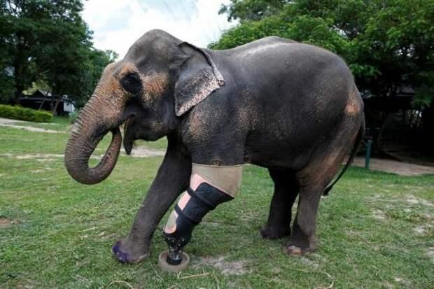Ортопед из США, в прямом смысле слова, «поставил на лапы» уже спас больше 20 тысяч животных