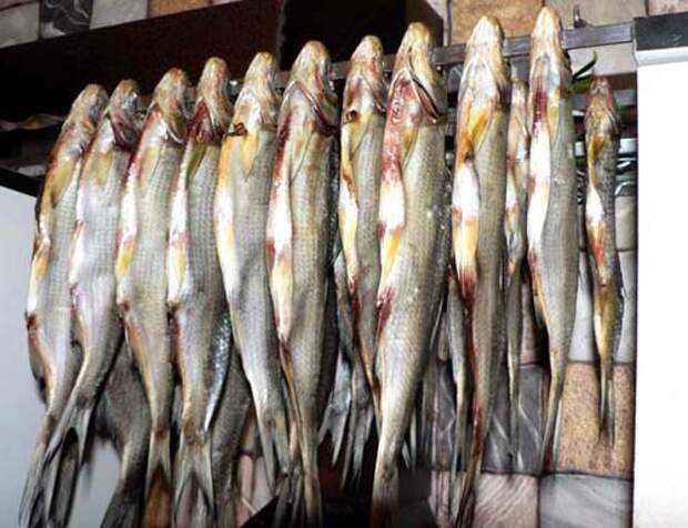 Как защитить рыбу от вездесущих мух