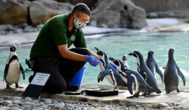 Традиционное ежегодное взвешивание животных в лондонском зоопарке
