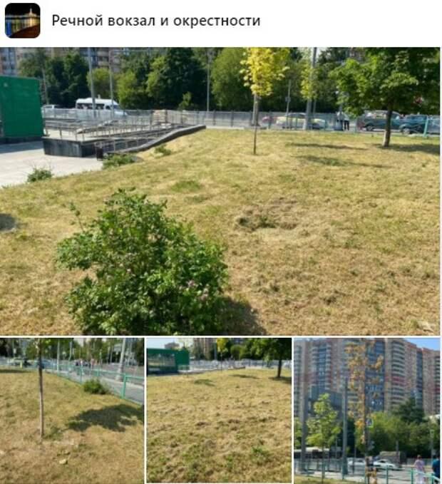 Полив молодых деревьев на Беломорской будет проходить чаще