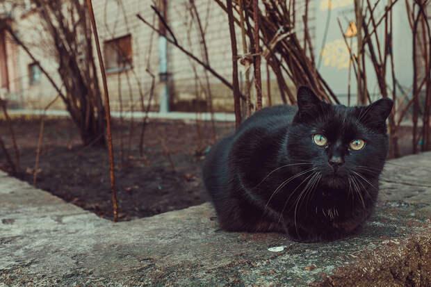 Чёрный кот устроил погром в ростовском алкомаркете