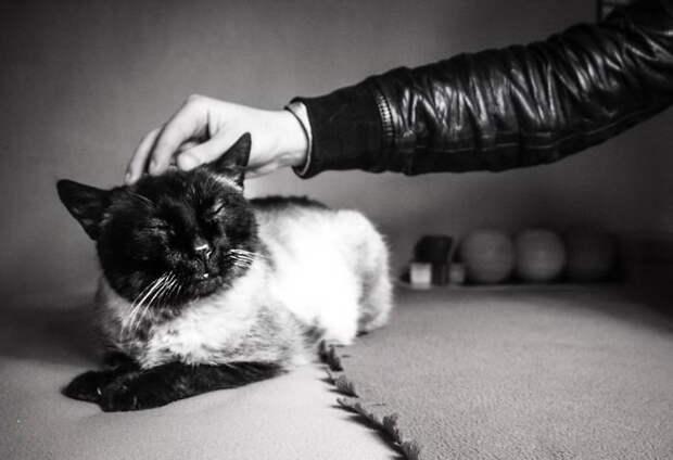 Счастливые кошки в фотографиях Marianna Zampieri