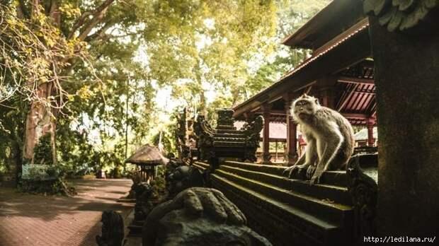 3925311_Bali_6 (700x393, 198Kb)