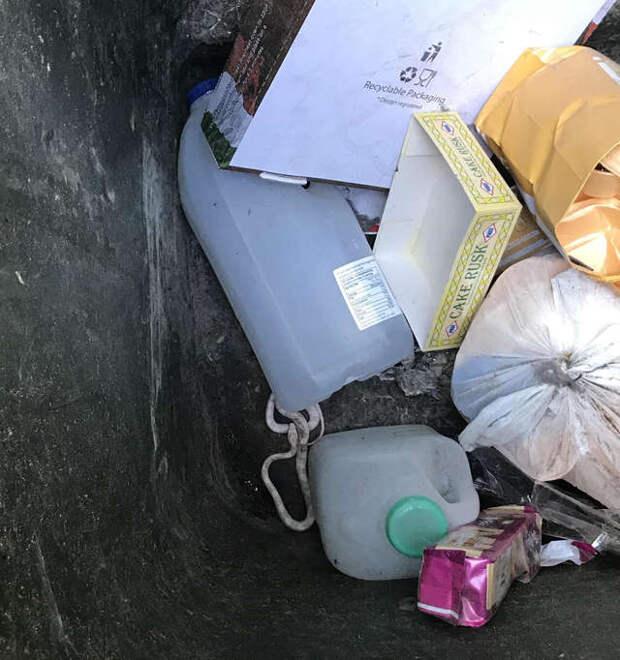 змея в мусорном баке