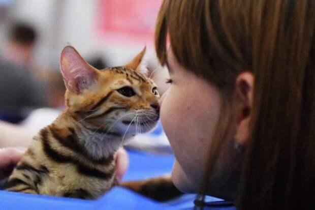 Вирусолог назвал маловероятным заражение COVID-19 от кошек