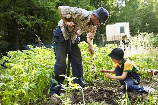 Июльские работы в саду и огороде