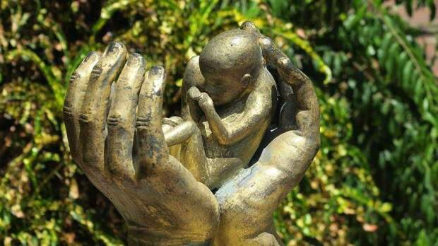 В США дали зеленый свет торговле органами нерожденных детей