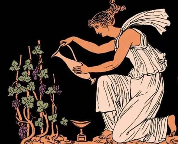 Ученые погрузили виноград в море и воссоздали невероятное вино древних греков
