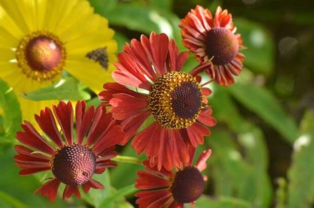 «Огненные» украшения для сада. 10 лучших цветов августа