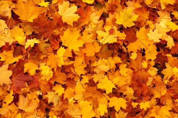 Спортплощадку в Путевом проезде освободили от опавшей листвы
