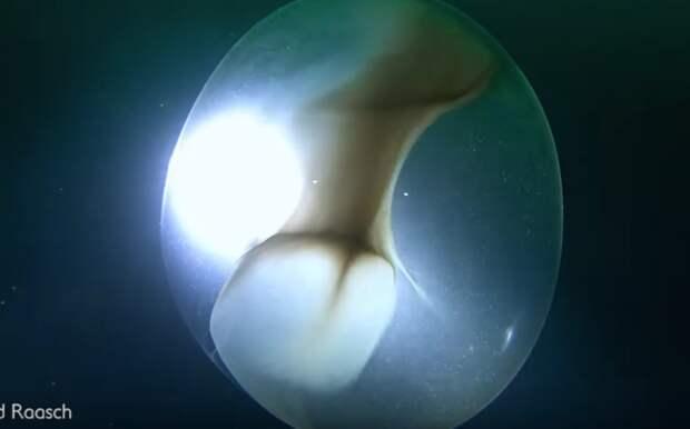 Ученые запечатлели редчайшую находку на дне океана