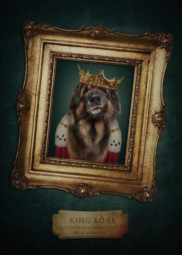 7. Не могу дождаться, когда стану королем... Забавные фото, анималист, домашние животные, очеловечивание, портреты животных, собака, собаки, фото собак