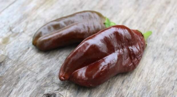 Селекционеры вывели уникальный перец – шоколадный!