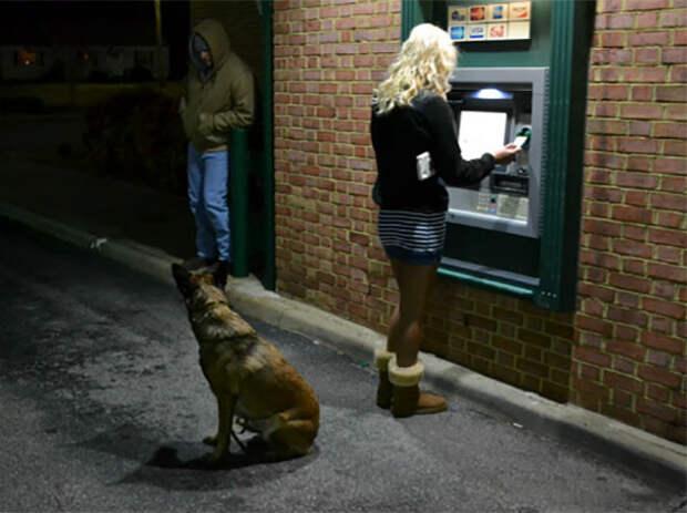 Эй, парень, даже не думай! Охранники, банкомат, безопасность, деньги, друзья человека, животные, охрана, собаки