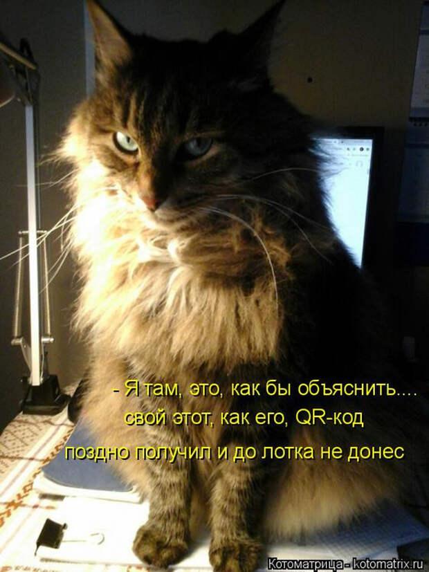 1586540469_kotomatrica-9 (524x700, 349Kb)