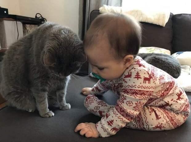 Я кошечку милую в руки возьму...