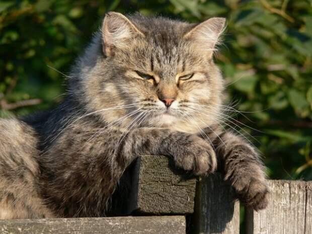 Кот на даче: как подготовить участок к приезду питомца