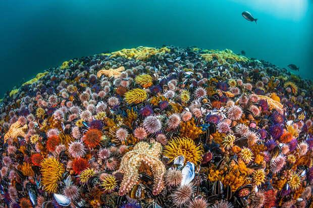 33 лучших фото океана, сделанных в 2019 году