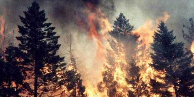 200 лесных пожаров тушить не будут!