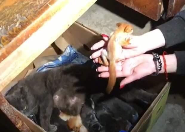 Кошка и ее дети чувствуют себя прекрасно. Фото: кадр видео