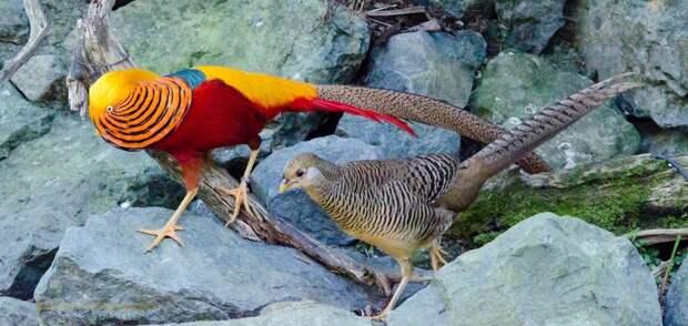 Король красоты и бледная спутница: 7 пар птиц, в которых трудно узнать родственников