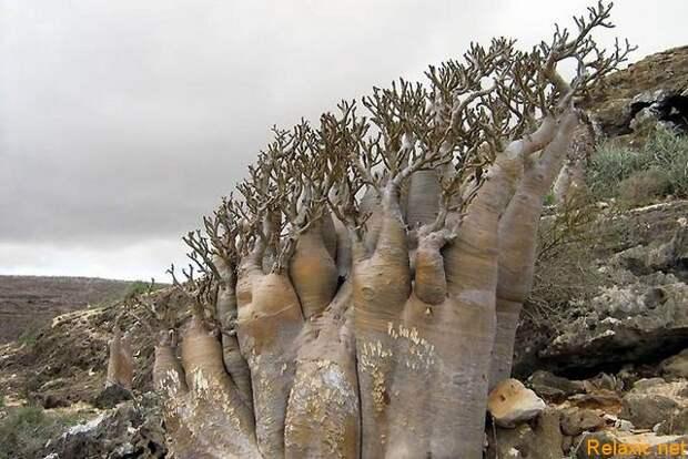 Socotra_012
