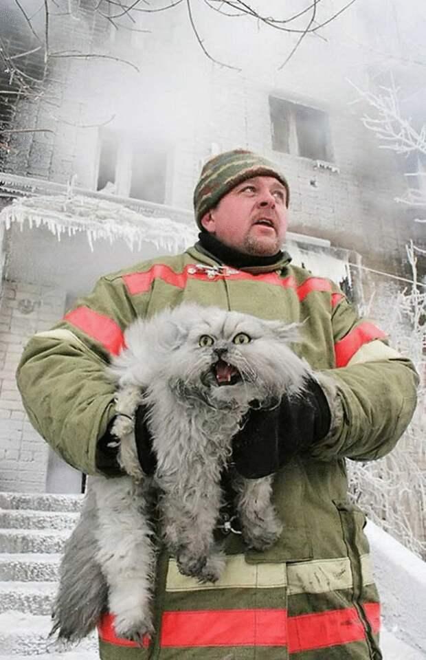 Проникновенные снимки пожарных, спасающих кошек из беды