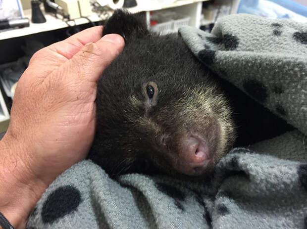 Фотограф спас еле живого медвежонка, рискуя при этом угодить за решетку
