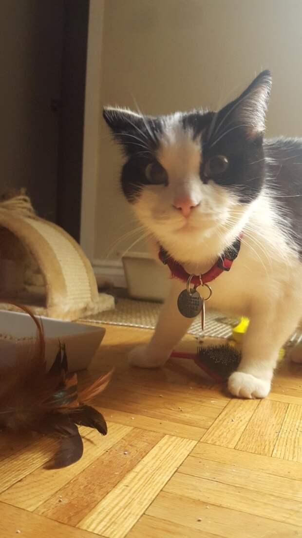 9. Что это ты там делаешь, хозяин? животные, коты, кошки, милота, питомцы, фото