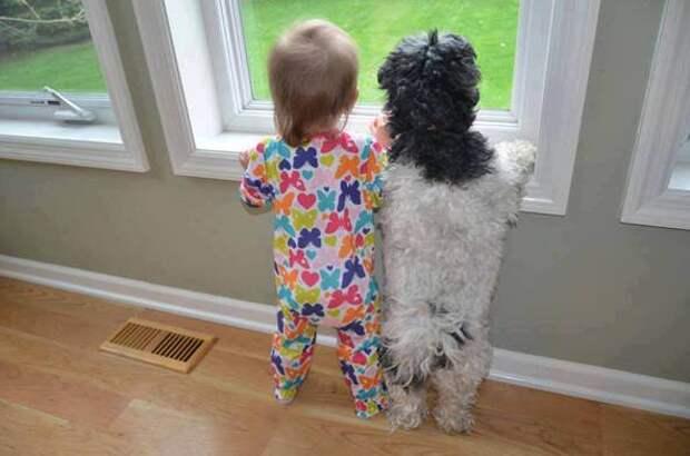 дети должны расти с домашними животными