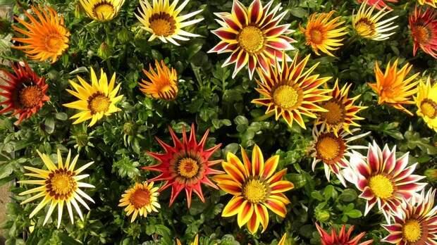 Что посеять в апреле? Часть 2. Список цветов на рассаду