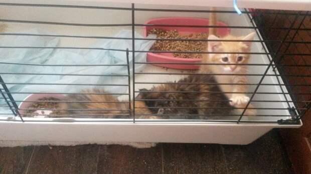 Трое брошенных котят жалобно мяукали и жались друг к другу волонтер, история, кот, котенок, кошка, приют