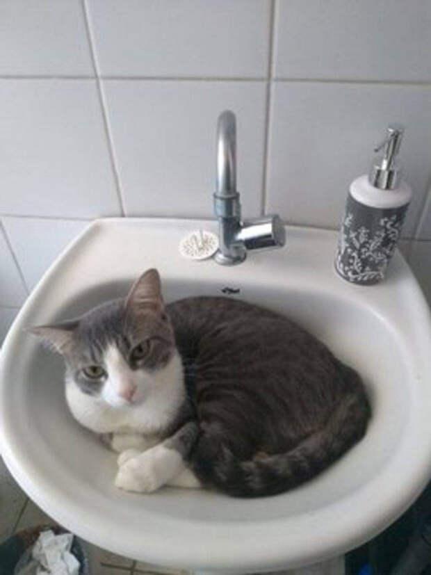 Кошки, которым удобно везде