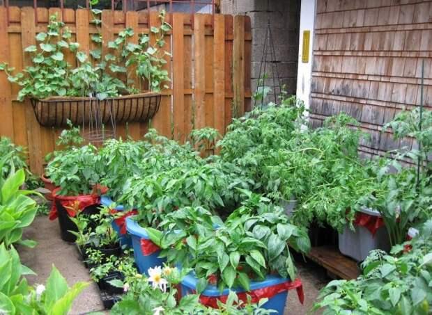 Овощи в контейнерах