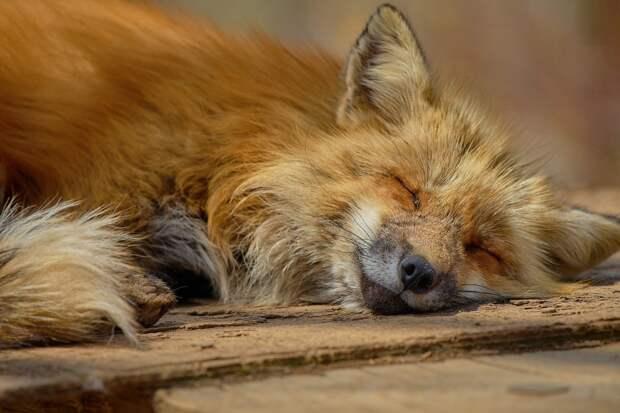 В Удмуртии сократилось количество случаев бешенства животных