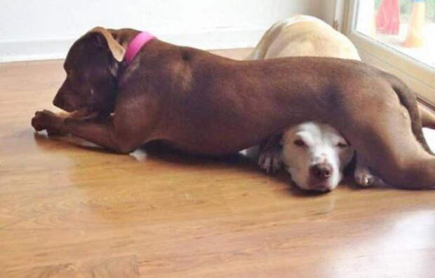 Животные, у которых нет ни грамма совести