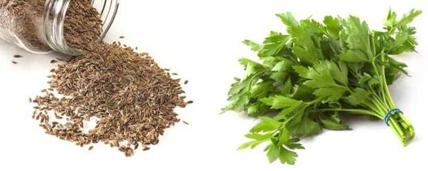 Петрушка и семена