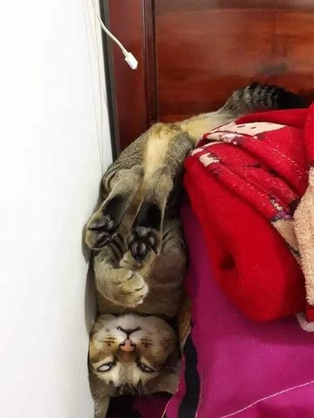 Кошки должны спать 16 часов в сутки при любом раскладе животные, коты, настроение