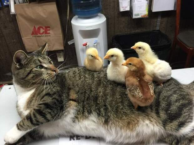 Кошки, постигшие нирвану (15 фото)