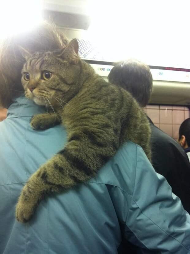 Удивленный кот животные, кошки, фото