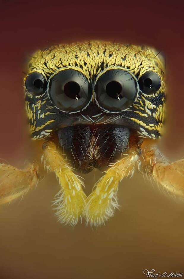 Портреты насекомых